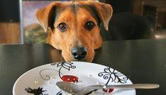 Mi perro mendiga comida mientras comemos. La solución, en 4 simples pasos