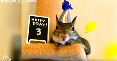 I think Jill has a terrific life and is one lucky, happy squirrel.