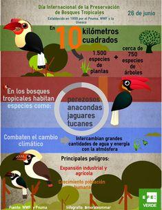 dia internacional de los bosques infografia - Google Search Fauna, Forests, Trees, Google, Tropical Rain Forest, Natural Resources, International Day Of, June, Tips