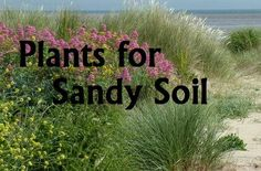 Plants for Sandy Soil