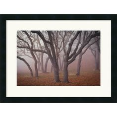 David Lorenz Winston 'Pilot Road Trees' Framed Art Print - Overstock™ Shopping - Top Rated Prints