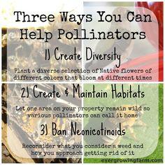 SO important! 3 Ways to Help Pollinators