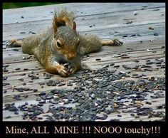 Yes ... they do love the sunflower seeds! They are into mine all the time!  :)