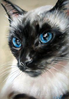 Royal Blue by ~astarvinartist on deviantART