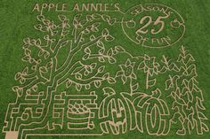 corn maze with different entries for the the mazes but all in the same field. Good idea