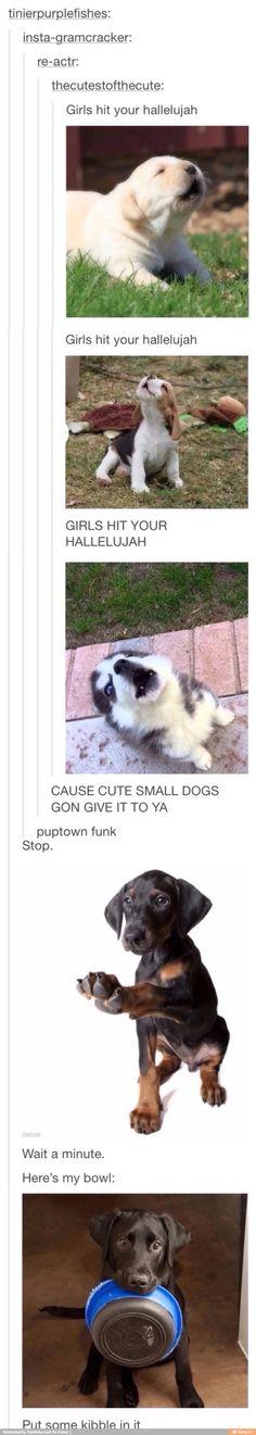 Funny cats memes laughing so hard songs Super Ideas Lustige Katzen Meme lachen so hart Lieder Super Ideen Funny Animal Memes, Cute Funny Animals, Funny Animal Pictures, Funny Cute, Funny Dogs, Funny Memes, Animal Humour, Hilarious Quotes, Super Funny