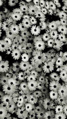 Flowers tumblr black and white marymarfo flowers tumblr black and white mightylinksfo
