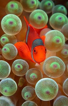 #AQUATIC http://www.eatnineghost.com/tag/underwater-world-ocean-life-colourful-beautiful/