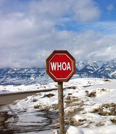 Stop Sign in Jackson Hole -- love this