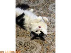 Gatos perdidos  España  Las Palmas - Lanzarote   Todas las ciudades en Las Palmas - Lanzarote March 24 2018 at 07:14AM   ver foto  #PERDIDO o #ENCONTRADO  Contacto y Info: https://leales.org/perdidos-o-encontrados/gatos-perdidos/ver-foto_i3902 #Difunde en #LealesOrg y #adopta para #AdoptaNoCompres O un #SeBusca de #perro o #gatos; #perdido o #encontrado ℹ BUSCA A SU GATO PERDIDO ENTRE PLAYA HONDA Y SAN BARTOLOMÉ. Un lector de Isla Sin Corrupción Samuel García Gutiérrez nos envía las…