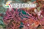 AlgaeBase is a database of information on algae that includes terrestrial, marine and freshwater organisms.