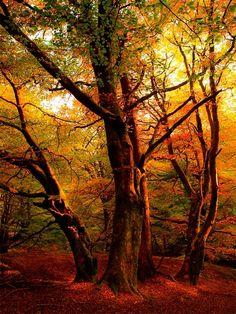 Autumn Sunset, Callander, Scotland by Nessa Like