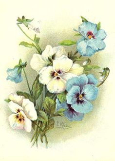 Pansies Print C. Klein Antique Victorian Chromo Pansy in soft blue and cream. Art Floral, Floral Vintage, Vintage Flowers, Floral Prints, Decoupage Vintage, Decoupage Paper, Vintage Cards, Vintage Images, Illustration Blume
