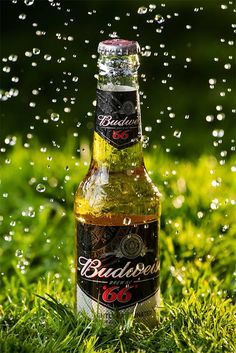 Raindrops falling on a back lighted bottle of a cold beer which stands on a fresh, green grass.