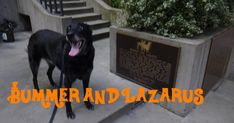 Bummer and Lazarus were two famous stray dogs that lived in San Francisco in the 1860s. San Francisco Tours, Living In San Francisco, Stray Dog, Weird, California, Dogs, Animals, Animales, Animaux