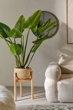 Eva Curcuma Potted Faux Tree is part of Home Accessories Shop Urban Outfitters Potted faux eva curcuma palm tree that brings welcoming energy to your space, no upkeep needed Featuring greenery that - Rattan Planters, Rattan Lamp, Cement Planters, Decoration Plante, Flower Decoration, House Plants Decor, Plants For Living Room, Plants In The House, Home Plants