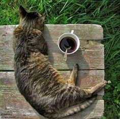 cat coffee break