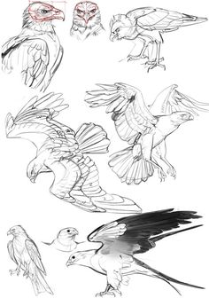 drawing animals for kids ; drawing animals with numbers ; drawing animals step by step ; drawing animals from numbers Pencil Drawings Of Animals, Animal Sketches, Bird Drawings, Drawing Sketches, Cool Drawings, Sketch Art, Drawing Animals, Drawing Birds, Sketch Ideas