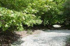 Acheron Springs - The Footpath World, Plants, The World, Plant, Planting, Planets, Peace