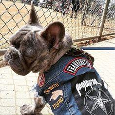 denim dog vest, battle jacket for dog, custom dog vest Dog Vest, Dog Jacket, Denim Vests, Battle Jacket, Custom Patches, Dog Coats, Heavy Metal, Animals And Pets, French Bulldog