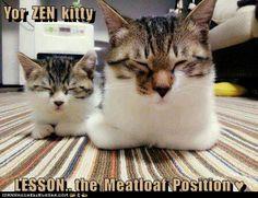 Yor  ZEN  kitty  LESSON..