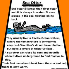 This pin talks about Sea Otters