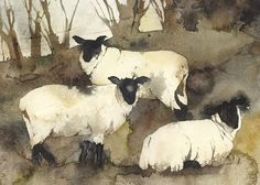 Winter Sheep - kate osborne Artist Artwork Gallery, Watercolour, animals, chickens, still life Sheep Paintings, Animal Paintings, Watercolor Animals, Watercolor Paintings, Watercolours, Arte Grunge, Sheep Art, Guache, Illustration