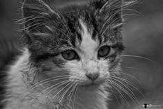 Photographer says this kitty was found wandering around garbage bags.....  :(  Wandering alone  by Miel  Mora on 500px