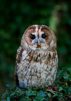 He's a beauty but not sure what kind of owl it is..