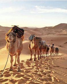 Merzouga. Sahara