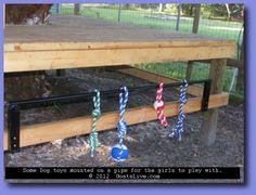 Goat toys~ Dollar Store dog toys Visit Us Keeping Goats, Raising Goats, Mini Goats, Baby Goats, Goat Playground, Goat Shelter, Goat Pen, Show Goats, Goat Care
