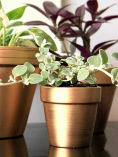 The container that displays plants should be as much of an art piece as the flowers or foliage within it. These creative makeovers turn thrifty terra-cotta pots into upscale vessels worthy of a prominent place in your home or garden./