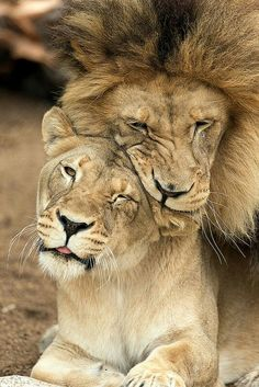A king and his queen