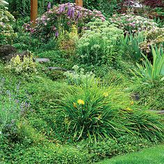 Slope-holding plants....Golden 'Stella de Oro' daylily, pink-flowering Spiraea japonica 'Shirobana', and yellow cinquefoil groundcover provide texture and tenacity ― their roots help control erosion.
