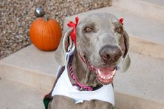 n(or �of the sweethearts� in her native tongue of German) has just returned from Oktoberfest. There she enjoyed wonderful Fall weather, the...