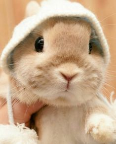 Learn About Pet Rabbit - Page 26 of 28 - Gloria Love Pets So Cute Baby, Cute Baby Bunnies, Cute Babies, Cute Little Animals, Cute Funny Animals, Cute Dogs, Baby Animals Pictures, Cute Animal Photos, Pet Rabbit