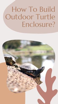 Many people want to keep their pet aquatic turtles in an outdoor enclosure. If you are one of them, then this article will help you… Aquatic Turtle Habitat, Aquatic Turtle Tank, Box Turtle Habitat, Turtle Aquarium, Aquatic Turtles, Turtle Pond, Land Turtles, Sea Turtles, Pet Turtle Care