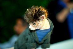 cat fishion   Cat Fashion Show!