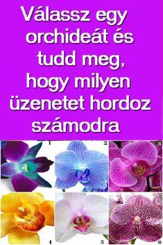 Ez a bámulatos növény a nőiességet, a szépséges és kedvességet fejezi ki. #ezotéria #virág #orchidea Personality, Horoscope, Color, Colour, Horoscopes, Colors