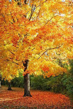 ✯ Tree in Mingo Park