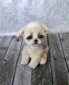 Купить щенок тедди Илья в интернет магазине на Ярмарке Мастеров