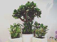 Quelques Photos, Boutique, Nature, Plants, Flowers, Naturaleza, Plant, Nature Illustration, Off Grid