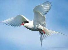 Sarkvidék - csodabogyo.lapunk.hu Bird, Animals, Animales, Animaux, Birds, Animal, Animais