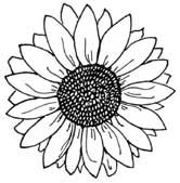 big sunflower coloring pages - photo#40