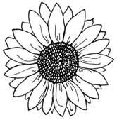 gerbera daisy quotes
