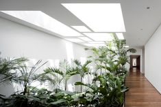 Isay Weinfeld - Project - Grecia House