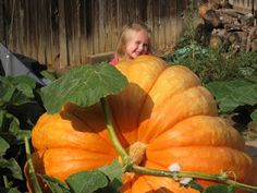 Really want to grow a giant pumpkin!!!