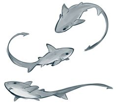 sharpie91: Today's the first day of shark week so here are some thresher sharks. Is it just me, or is anyone else disappointed that most of shark week is devoted to only a few species of sharks? *LOVELOVELOVELOVELOVELOVELOVELOVE* Give me one, please?