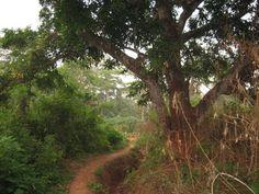 Boda, Lobaye, Central African Republic.