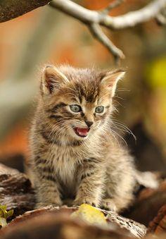cat :)))